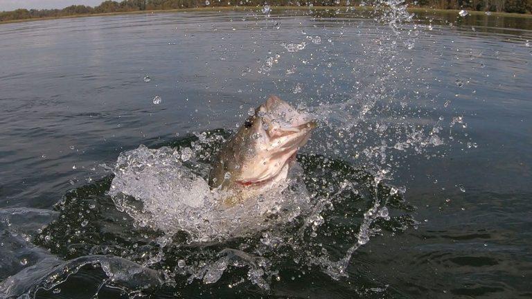 Spring FIshing Bass